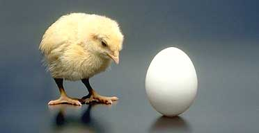 Models or drawings: which comes first, the chicken or the egg?